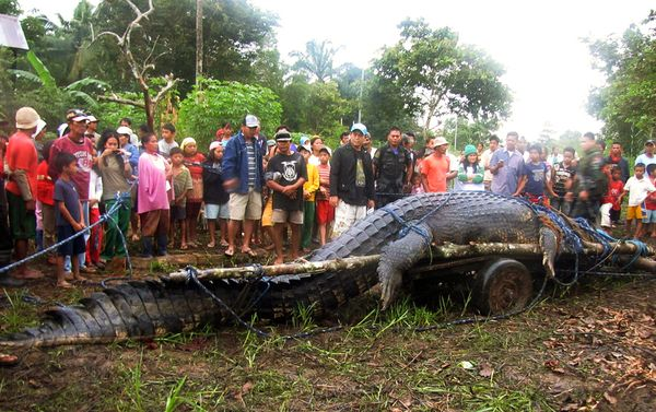 Worlds Biggest Crocodile