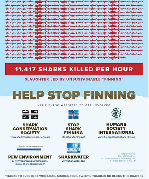 Sharks 7